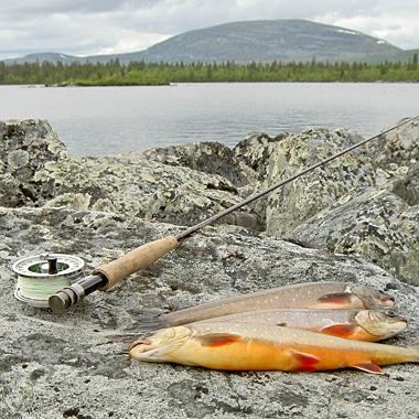 En av nordens största flugfiskebutiker uppdaterar