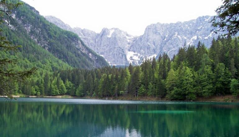 """nature"" (CC BY-SA 2.0)by Elisa Bracco"