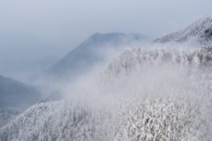 winter mountain forest background